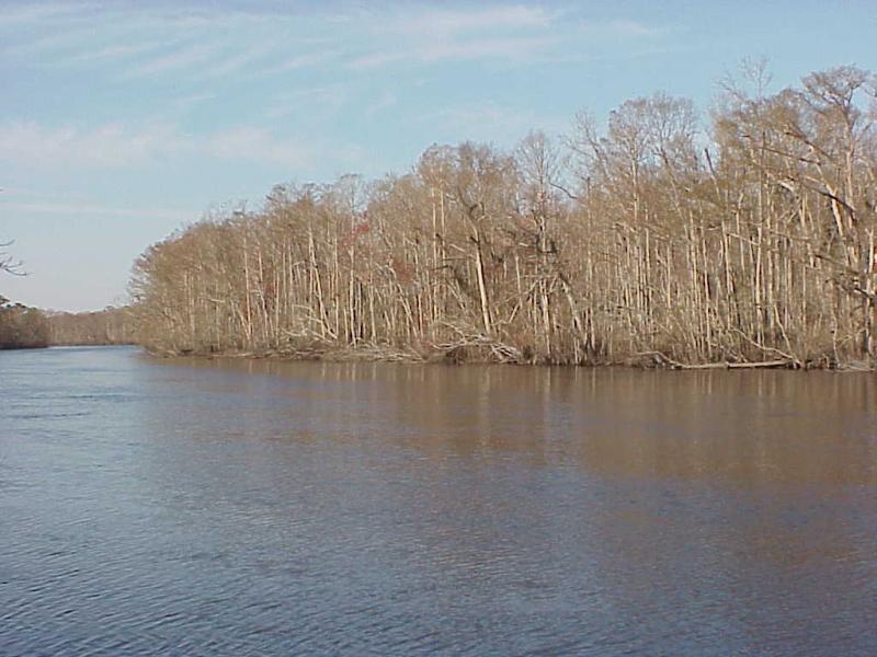 "<img typeof=""foaf:Image"" src=""http://statelibrarync.org/learnnc/sites/default/files/images/bottomland_forest.jpg"" width=""1024"" height=""768"" alt=""Coastal plain bottomland forest"" title=""Coastal plain bottomland forest"" />"