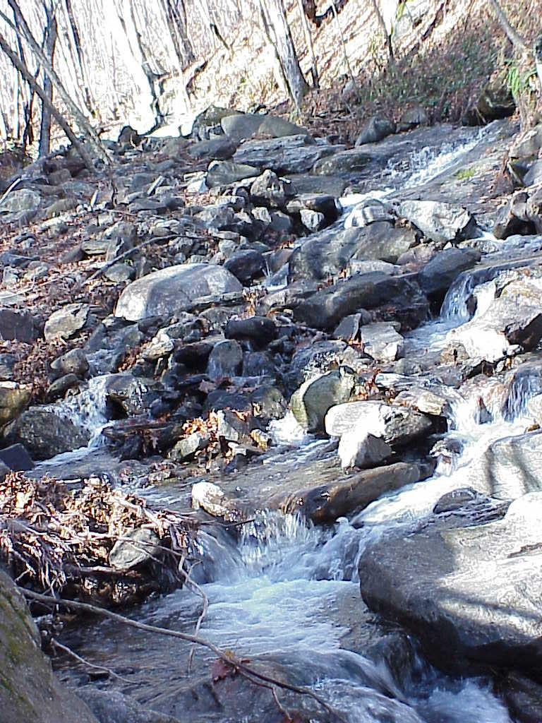 """<img typeof=""""foaf:Image"""" src=""""http://statelibrarync.org/learnnc/sites/default/files/images/creek_elevated_roan.jpg"""" width=""""768"""" height=""""1024"""" alt=""""Creek at middle elevations-Roan Highlands"""" title=""""Creek at middle elevations-Roan Highlands"""" />"""