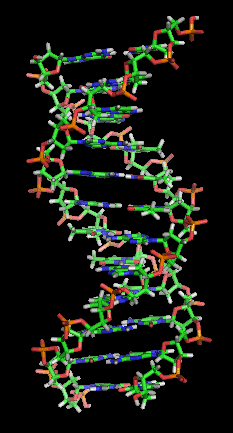DNA Section