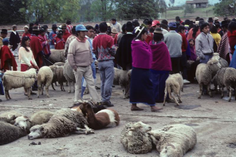"<img typeof=""foaf:Image"" src=""http://statelibrarync.org/learnnc/sites/default/files/images/ecuador_089.jpg"" width=""1024"" height=""682"" alt=""Animal market in Riobamba, Ecuador"" title=""Animal market in Riobamba, Ecuador"" />"