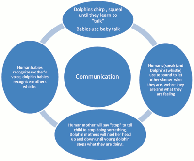 Diagram Comparing Human And Dolphin Communication Ncpedia