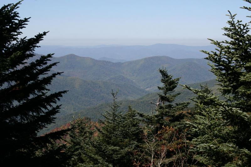 "<img typeof=""foaf:Image"" src=""http://statelibrarync.org/learnnc/sites/default/files/images/img_1695.jpg"" width=""1024"" height=""683"" alt=""Fraser firs at Mount Mitchell State Park"" title=""Fraser firs at Mount Mitchell State Park"" />"
