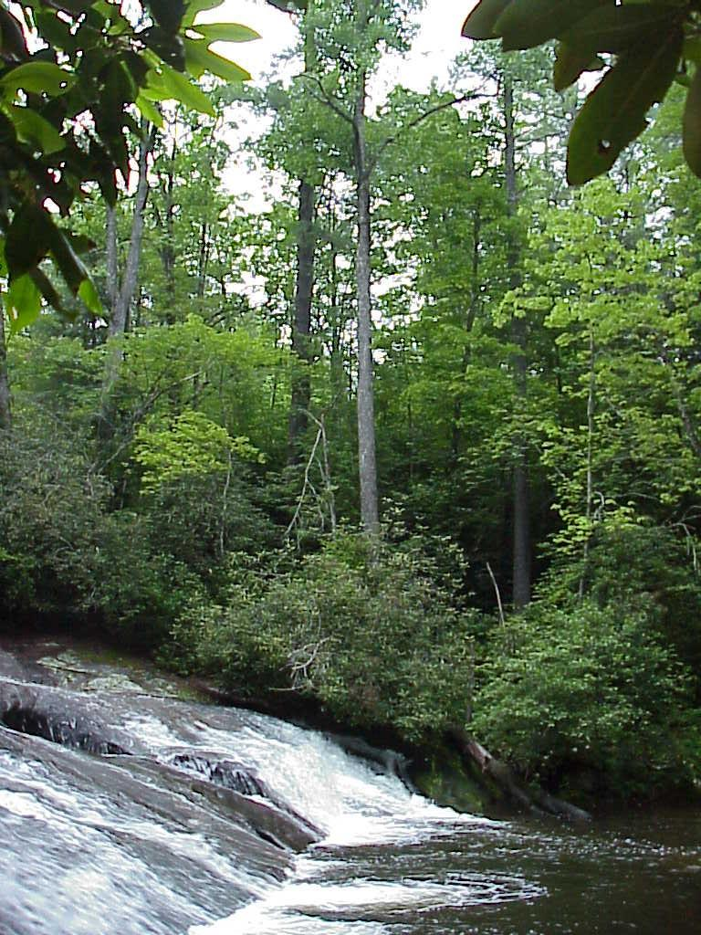 "<img typeof=""foaf:Image"" src=""http://statelibrarync.org/learnnc/sites/default/files/images/mountain_creek.jpg"" width=""768"" height=""1024"" alt=""Plant communities - Mountain Creek Acidic Cove Forest"" title=""Plant communities - Mountain Creek Acidic Cove Forest"" />"