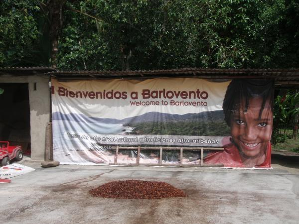 "<img typeof=""foaf:Image"" src=""http://statelibrarync.org/learnnc/sites/default/files/images/p7080579r_600.jpg"" width=""600"" height=""450"" alt=""Cacao plantation, Barlovento, Venezuela"" title=""Cacao plantation, Barlovento, Venezuela"" />"