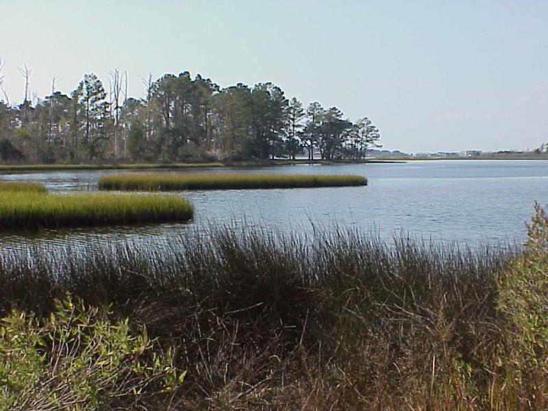 "<img typeof=""foaf:Image"" src=""http://statelibrarync.org/learnnc/sites/default/files/images/salt_marsh4.jpg"" width=""1024"" height=""768"" alt=""Salt marsh along the flanks of the high salinity section"" title=""Salt marsh along the flanks of the high salinity section"" />"