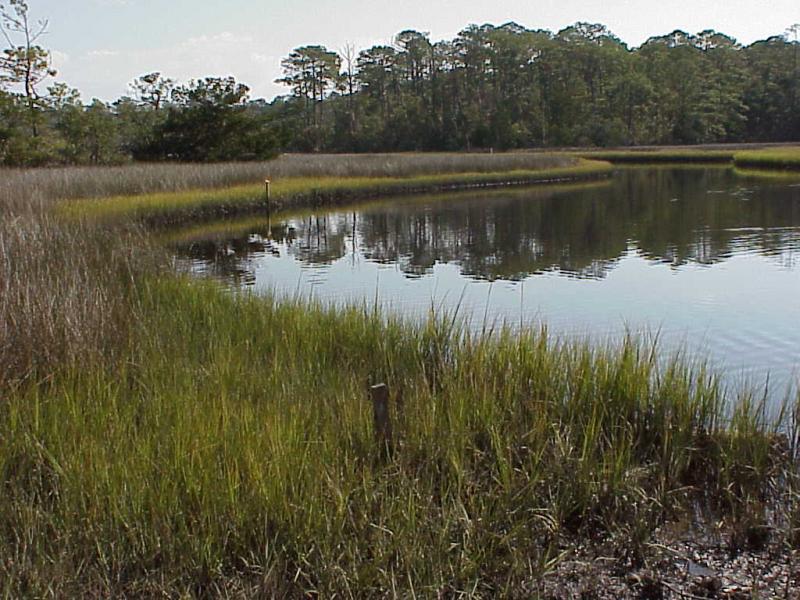"<img typeof=""foaf:Image"" src=""http://statelibrarync.org/learnnc/sites/default/files/images/salt_marsh_typical.jpg"" width=""1024"" height=""768"" alt=""Typical salt marsh plant zonation pattern"" />"