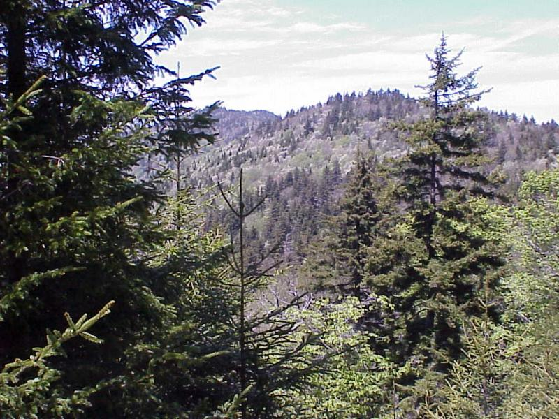 """<img typeof=""""foaf:Image"""" src=""""http://statelibrarync.org/learnnc/sites/default/files/images/spruce_fir_forest2.jpg"""" width=""""1024"""" height=""""768"""" alt=""""Transitions to Spruce-fir Forest from Northern Hardwoods """" title=""""Transitions to Spruce-fir Forest from Northern Hardwoods """" />"""