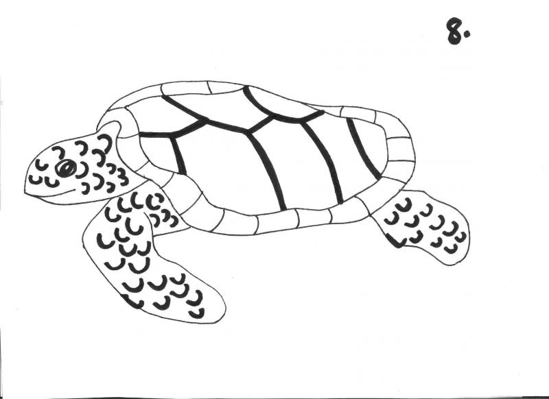 """<img typeof=""""foaf:Image"""" src=""""http://statelibrarync.org/learnnc/sites/default/files/images/step_8.jpg"""" width=""""2338"""" height=""""1700"""" alt=""""Sea turtle drawing: step 8"""" title=""""Sea turtle drawing: step 8"""" />"""