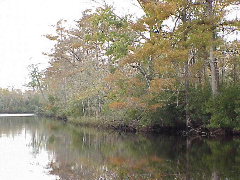"""<img typeof=""""foaf:Image"""" src=""""http://statelibrarync.org/learnnc/sites/default/files/images/swamp_forest.jpg"""" width=""""1024"""" height=""""768"""" alt=""""Swamp forest in the tidal freshwater section"""" />"""