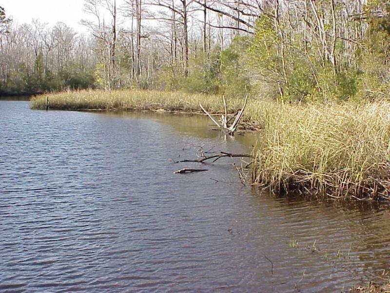 "<img typeof=""foaf:Image"" src=""http://statelibrarync.org/learnnc/sites/default/files/images/tidal_freshwater_marsh.jpg"" width=""1024"" height=""768"" alt=""Tidal freshwater marsh"" title=""Tidal freshwater marsh"" />"
