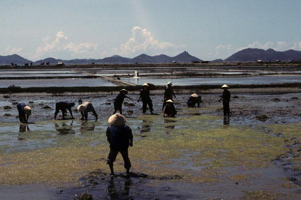 """<img typeof=""""foaf:Image"""" src=""""http://statelibrarync.org/learnnc/sites/default/files/images/vietnam_091.jpg"""" width=""""600"""" height=""""400"""" alt=""""Salt production workers stand in a muddy salt field south of Nha Trang"""" title=""""Dalt production workers stand in a muddy salt field south of Nha Trang"""" />"""