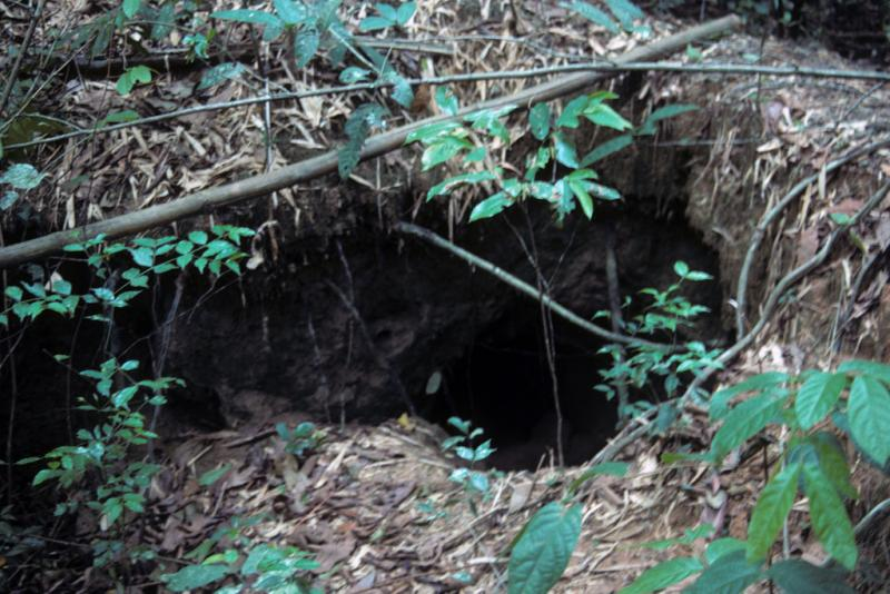 "<img typeof=""foaf:Image"" src=""http://statelibrarync.org/learnnc/sites/default/files/images/vietnam_168.jpg"" width=""1024"" height=""683"" alt=""Trap entrance into underground Vietnam War tunnel at Cu Chi"" title=""Trap entrance into underground Vietnam War tunnel at Cu Chi"" />"