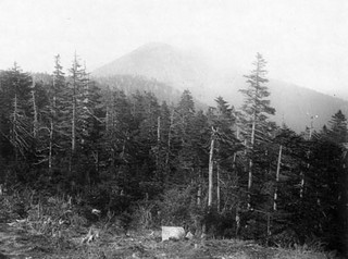 """View of the Black Mountains, Mitchell County, NC, c.1890's. From the H. H. Brimley Photo Collection, PhC.42, North Carolina State Archives., call #PhC42.Bx24."
