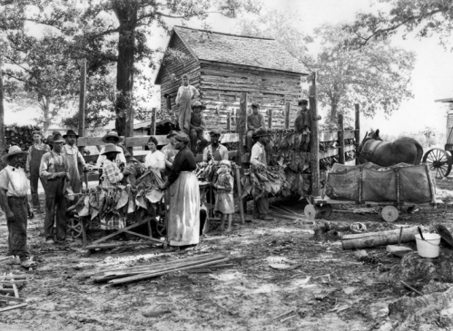 Looping tobacco in Granville County, ca. 1930. Photograph by Albert Barden. North Carolina Collection, University of North Carolina at Chapel Hill Library.