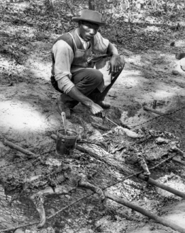 A barbecue cook in Franklin County applies sauce to pigs being grilled over an open pit, ca. 1941. Photograph by Albert Barden. North Carolina Collection, University of North Carolina at Chapel Hill Library.