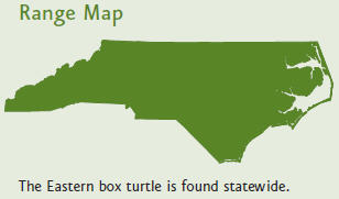 Box turtles are found throughout North Carolina