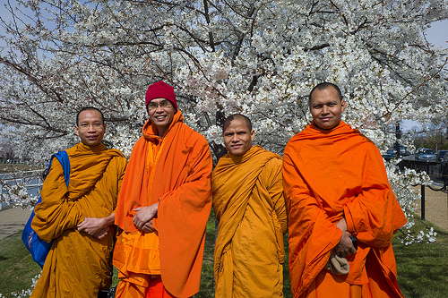 """Four Buddhist monks, who live in North Carolina, photograph each other among the cherry trees. The men are originally from Thailand."" Image courtesy of Flickr user U.S. Embassy Tokyo."