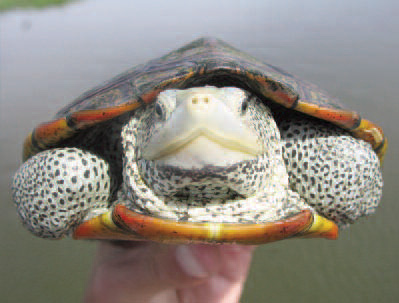 Beautiful turtle