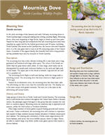 Mourning Dove PDF profile from NC Wildlife Resources Commission