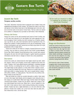 Click to open the PDF of the Eastern Box Turtle profile