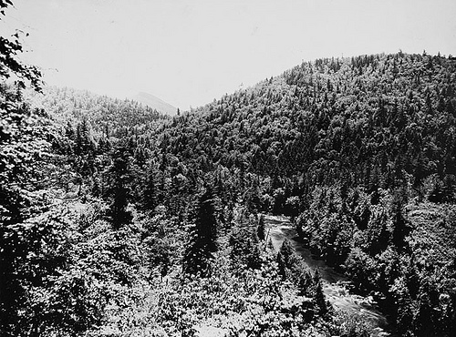 From Gooseneck, or loop view- Deciduous and coniferous trees mingle in a color scheme of bewildering beauty May 31, 1909 Frank W. Bicknell Photograph Collection, PhC.8, North Carolina State Archives, call #: PhC68_1_539, Raleigh, NC.