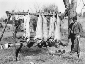 Slaughtered hogs in Halifax County, 1939. Howard Odum Collection, no. P-3167, Southern Historical Collection, Wilson Library, UNC-Chapel Hill.