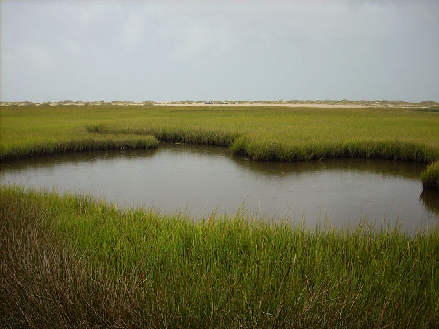 """Fort Fisher State Recreation Area Salt Marsh"" by Dincher, October 2007. Licensed under CC BY-SA 3.0 via Commons"