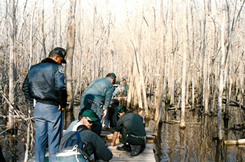 Building the Palmettao Boardwalk, Goose Creek State Park, photograph circa 1980.  Used courtesy of the North Carolina Department of Parks and Recreation.