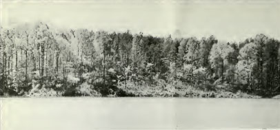 Photograph of Lake Norman, ca. early 1960s. From <i>North Carolina State Parks</i>, 1965, NC Division of Parks and Recreation.