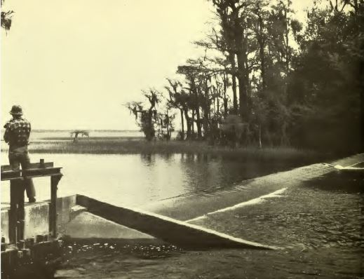 Photograph, Lake Waccamaw State Park, ca. 1970s. From the <i>Lake Waccamaw State Park Master Plan,</i> Master Planning Unit, North Carolina Division of Parks and Recreation, July 1976.