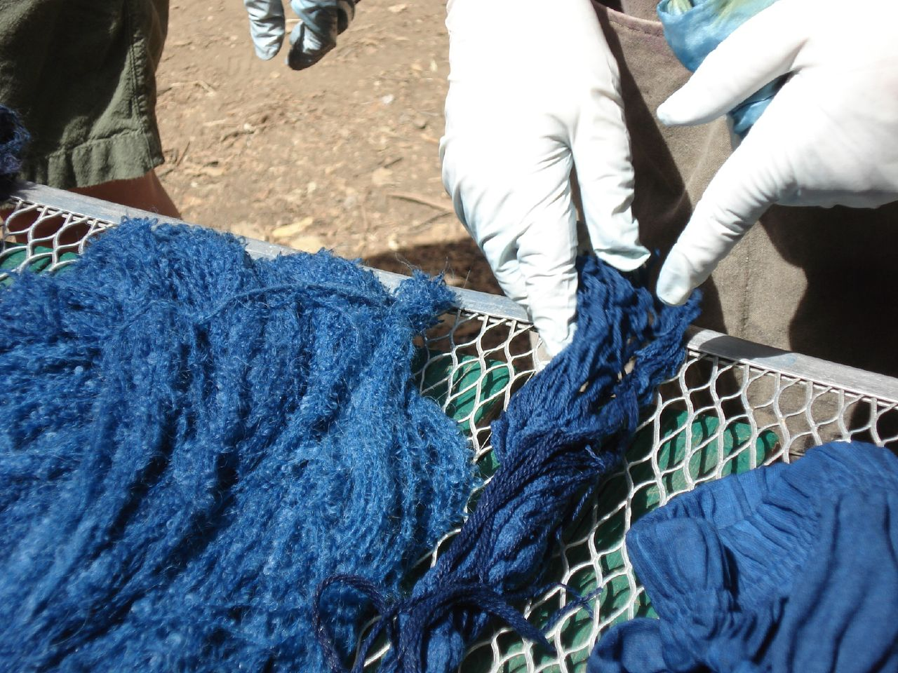 The dye of indigo plant is blue, as can be seen here on this dyed wool.
