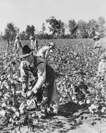 Picking cotton, ca. 1930. Photograph by Bayard Wootten. North Carolina Collection, University of North Carolina at Chapel Hill Libraries..