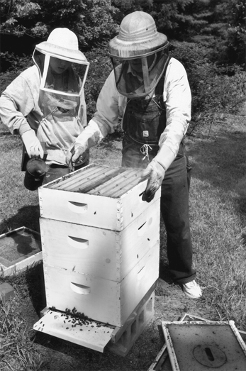 Beekeepers at work near High Point, 2002. Photograph by Nelson Kepley. Greensboro News and Record.