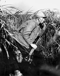 A duck hunter crouches inside a blind at Currituck, 1944. Courtesy of North Carolina Office of Archives and History, Raleigh.