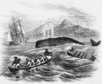 the constant depletion of whale populations in the early century Fisheries and marine animal populations:  fisheries and marine animal populations:  order of magnitude declines in nineteenth-century sperm whale.