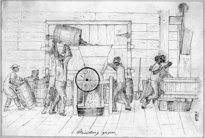 An 1870s drawing of grapes being crushed at the C. G. Garrett and Company Vineyards and Wine Cellars in Halifax County. North Carolina Collection, University of North Carolina at Chapel Hill Library. Courtesy of Christopher Terrell.
