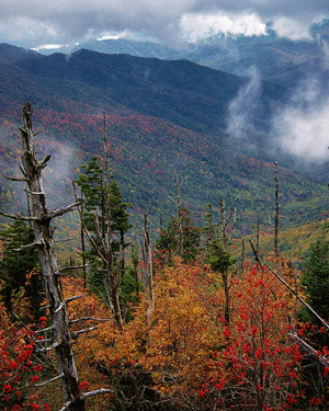The Great Smoky Mountains National Park - from Flickr user rskoon