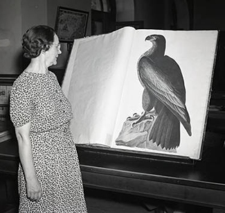 State Librarian Carrie Broughton examining an Audubon print, September 9 1940. Image courtesy of the Raleigh News and Observer and copyright by them..