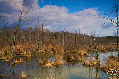 North Carolina Wetlands, 2009, Guilford County.  Image courtesy of Flickr user Jim Dollar.