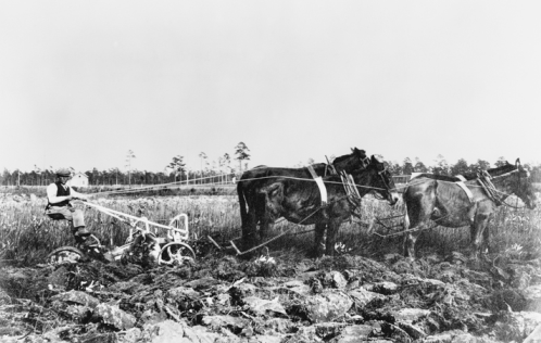 Dutch settler working the land at Van Eeden, 1913. North Carolina Collection, University of North Carolina at Chapel Hill Library.