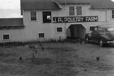 J.P. Doughtry Poultry Farm, Clinton, N.C., Sampson County, 1942. Image available online from North Carolina State University Libraries.