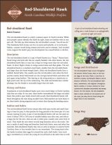 classification of aves upto order pdf