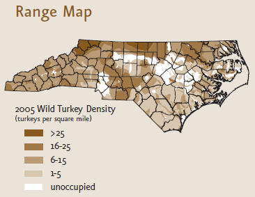 Wild turkey range map