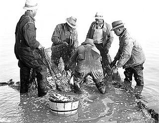 """Brickle, Edenton, Shad and Herring fishing n.d. (1935-1940). From the Charles A. Farrell Photograph Collection, PhC.9, North Carolina State Archives, Raleigh, NC, access #: PhC_9_2_58_11a."